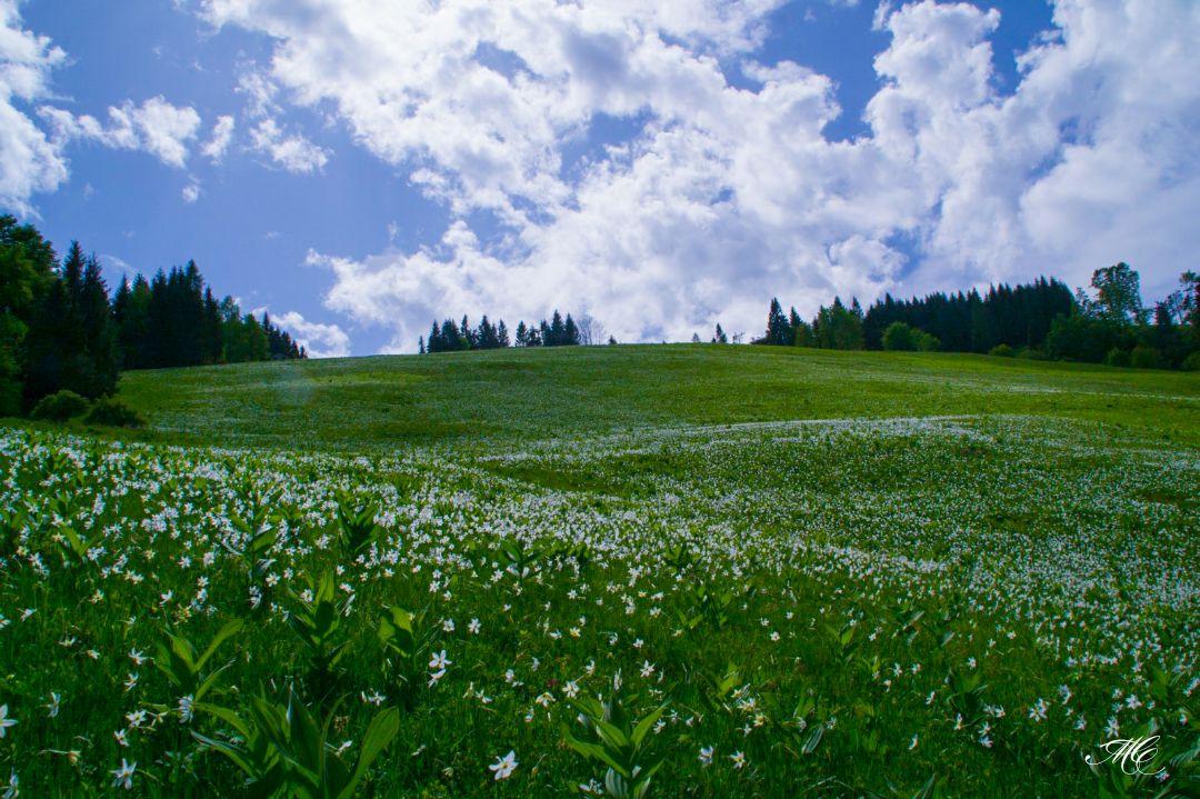 Categorie: Landscape & Nature Model; Ph: MARTYNA COSTA; Location: Pedavena, BL, Italia