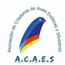 Acaes Club y globalnetside