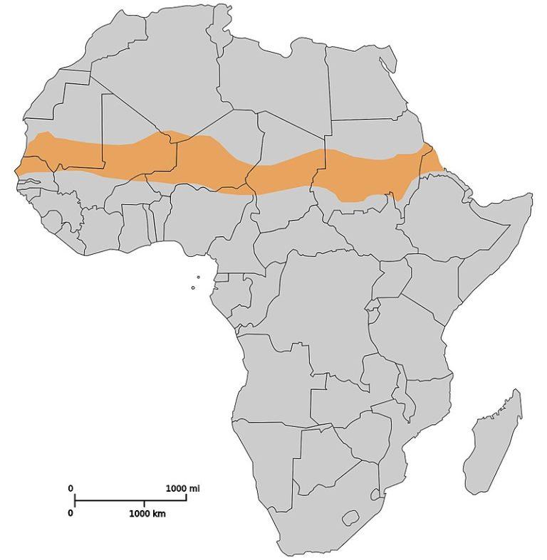 Upprorsbekämpning i Sahel-länderna i Afrika, eller varför finns svenska soldater i Mali?
