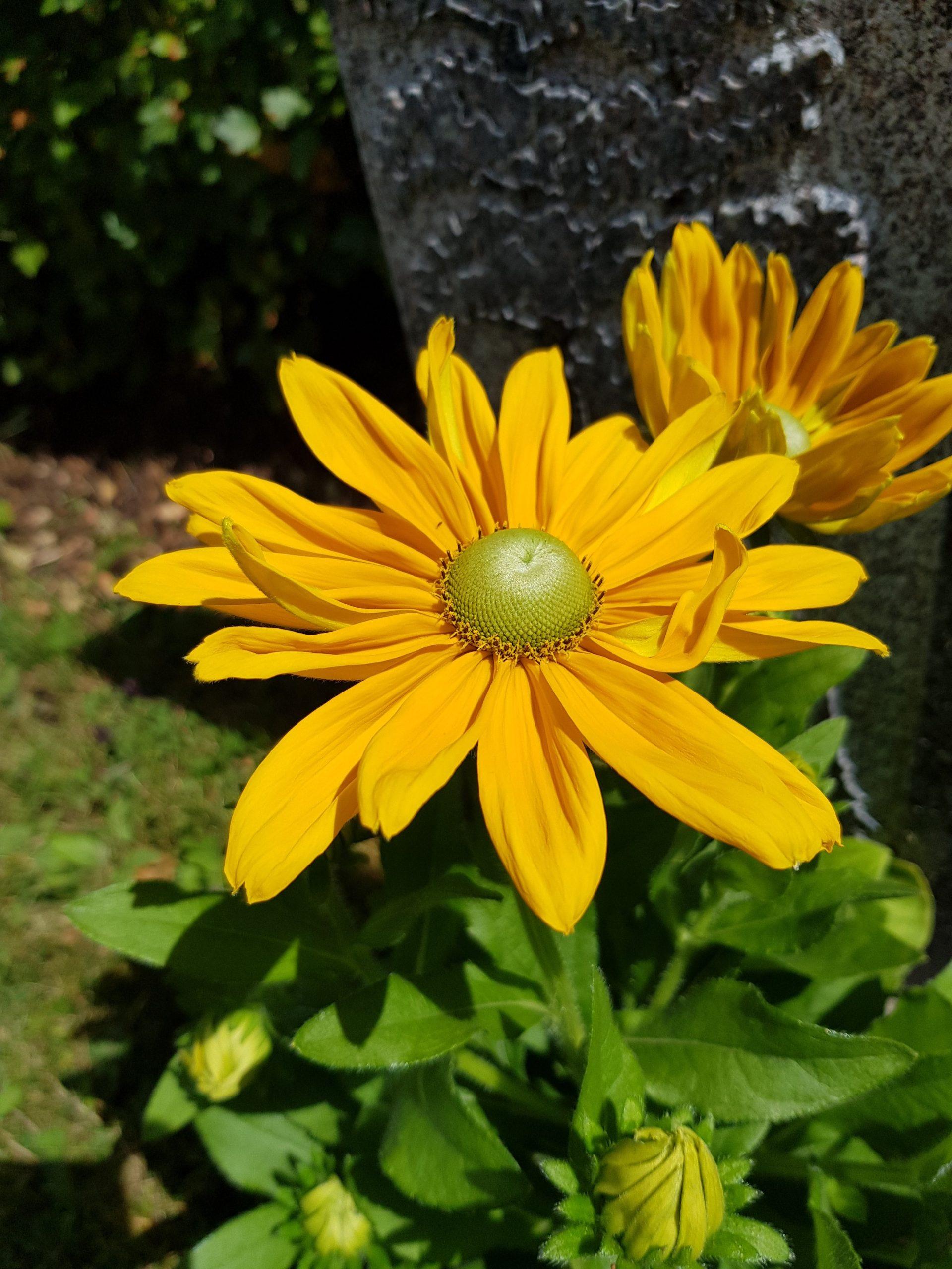 Så får du en prunkande och vacker blomsterrabatt