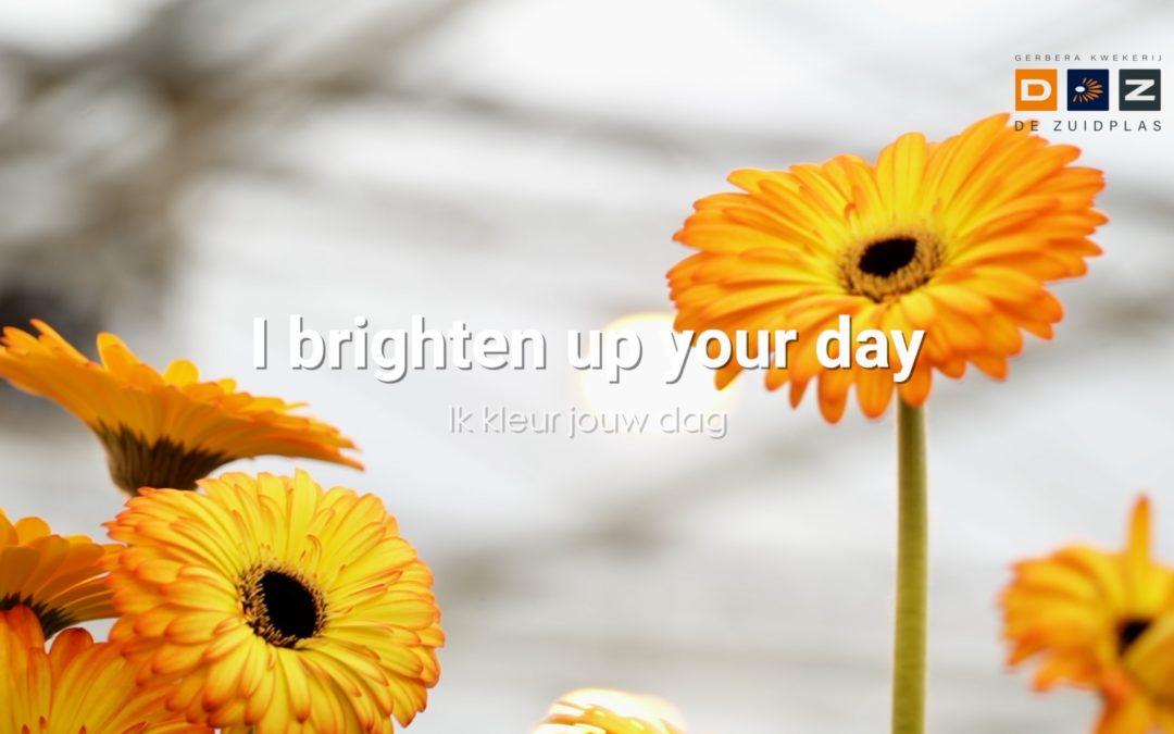 I brighten your world
