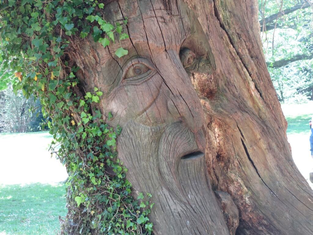 The story tree - a large trunk with a face carved into it