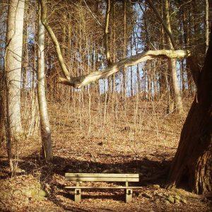 Marienlundskoven i Kolding