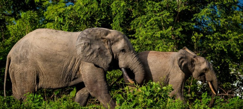 Mole National Park Day Tour by Grassroot Tours