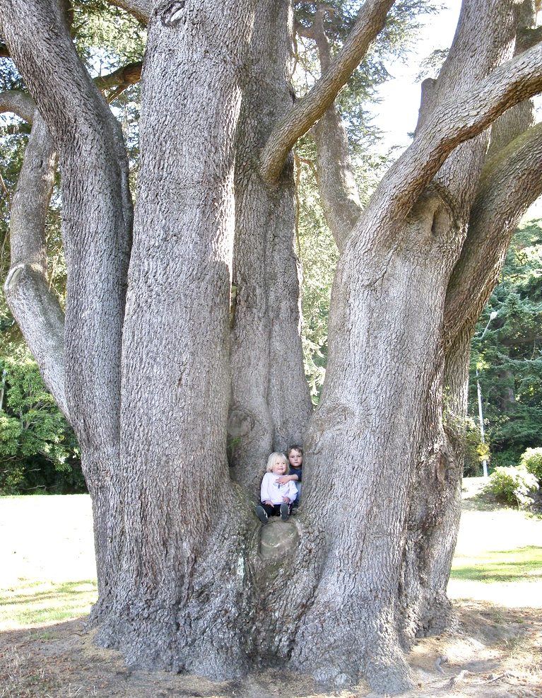 Aburi Botanical Garden-grassroottours.com