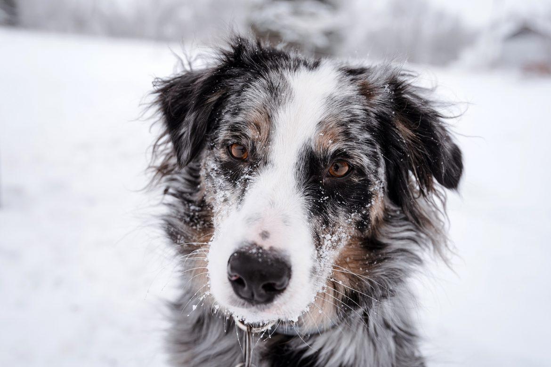 Tierische Weihnachten: Hundekekse