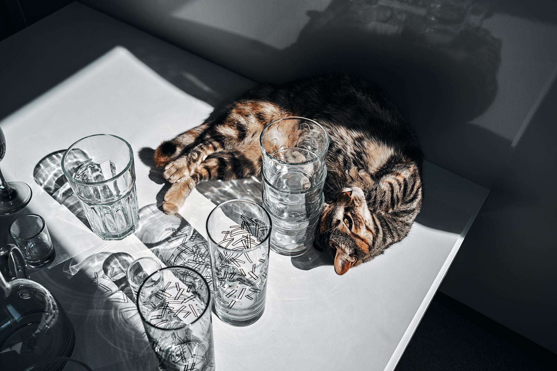 Bei Natalia ist im Glasfach sogar Platz für ihre Katze