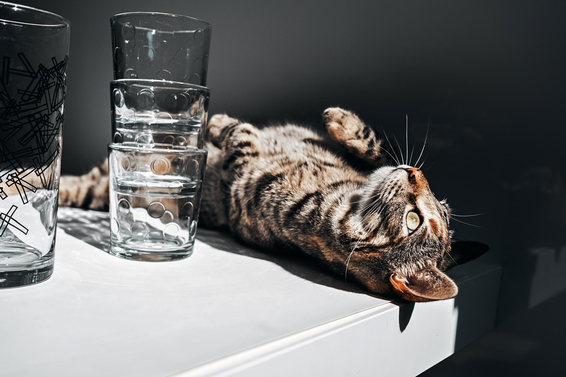 Ob mit oder ohne Katze: Universalgläser erleichtern den Überblick