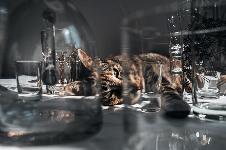 Aufräumen für Faule: Ordnung im Gläserschrank