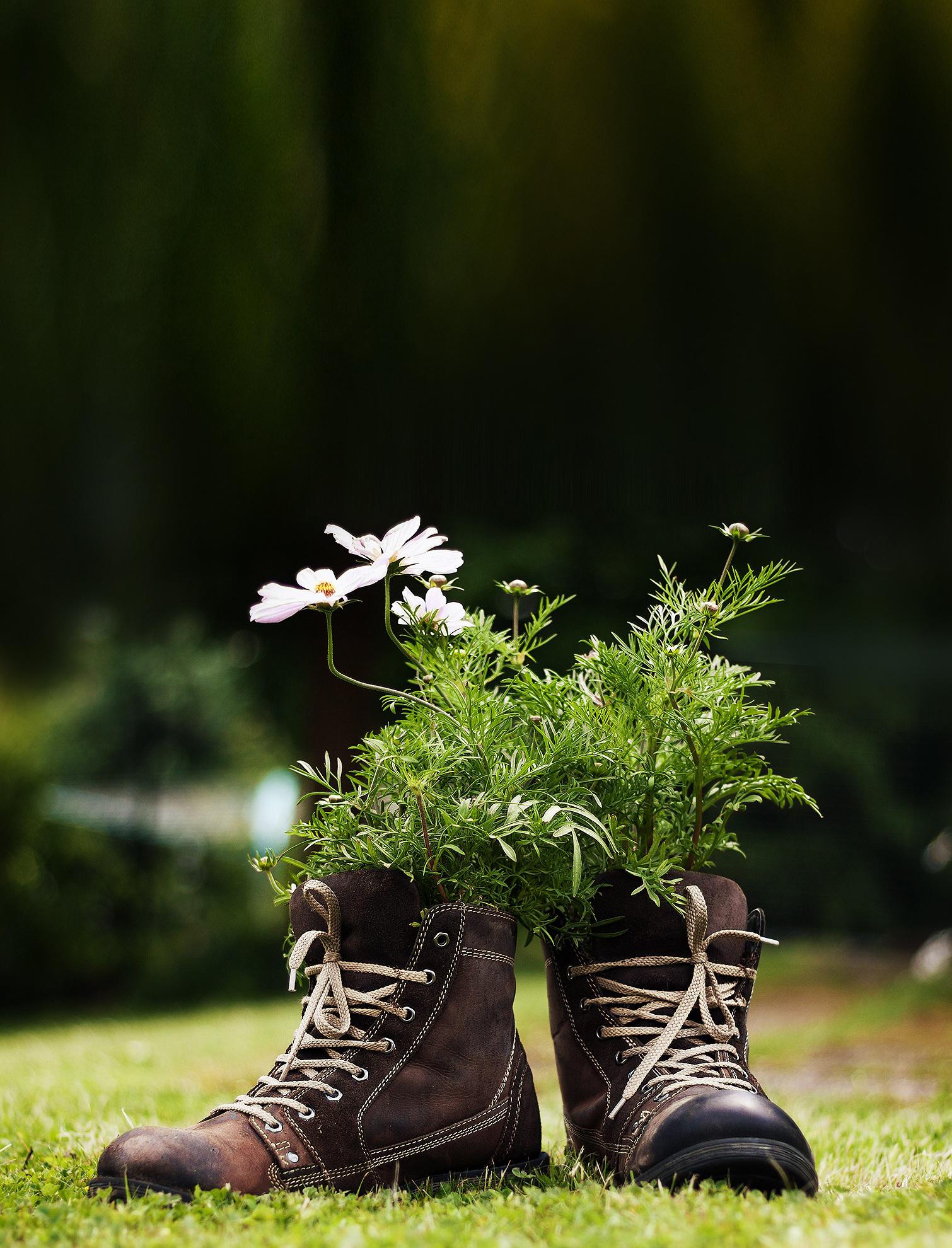 Alte Stiefel lassen sich wunderbar als Blumentöpfe zweckentfremden – ein Hingucker in jedem Garten!