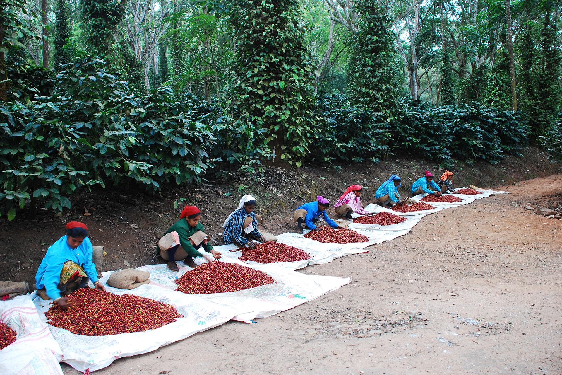 Mitarbeiterinnen auf der Elk Hill Coffee Farm