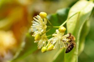 Insekten schützen kann jeder