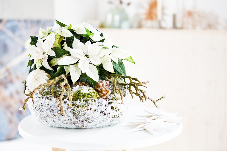 Frozen Bowl zum 4. Advent