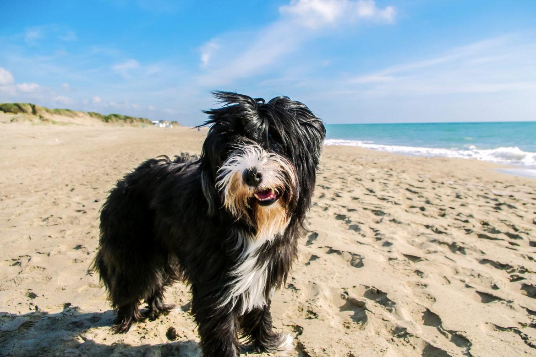 Gesund reisen mit dem Hund