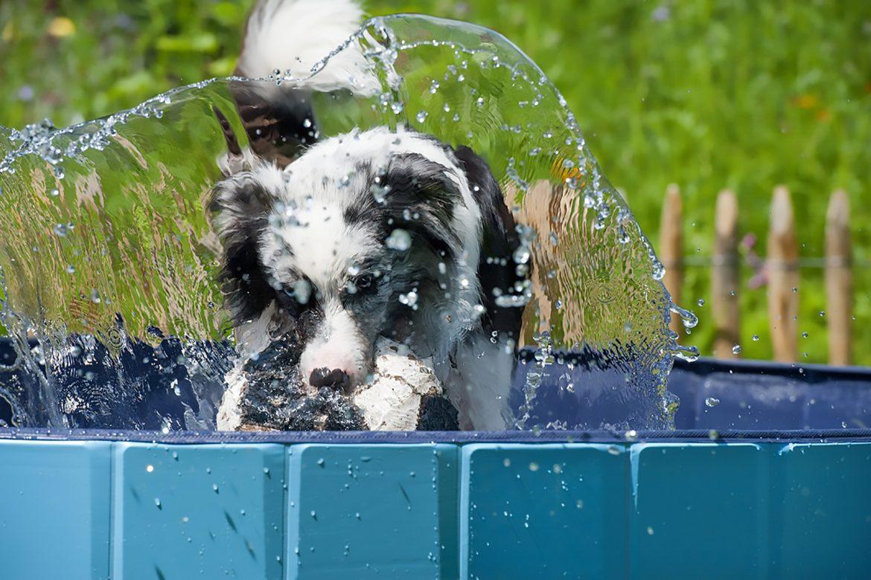 Hitze und Hund - Abkühltipps für Vierbeiner