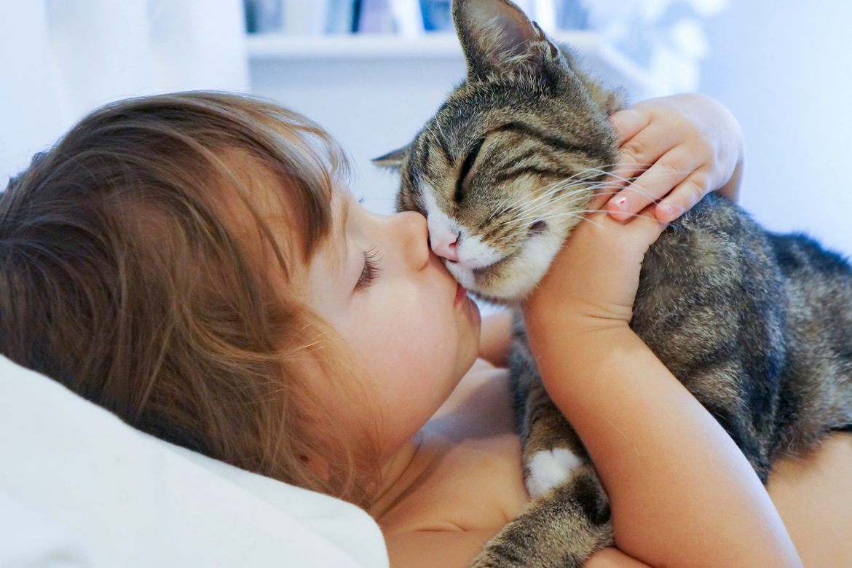 Fünf Gründe für ein Leben mit Katze