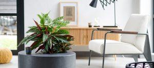 Das grüne Office - Positive Effekte von Pflanzen am Arbeitsplatz