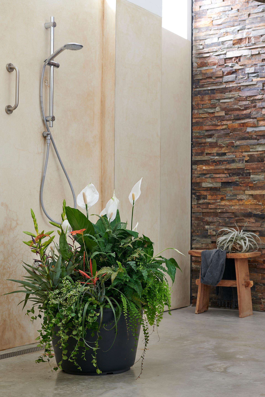 Tillandsia, Kletterficus, Frauenhaarfarn und Einblatt fühlen sich auch in Nähe der Dusche wohl
