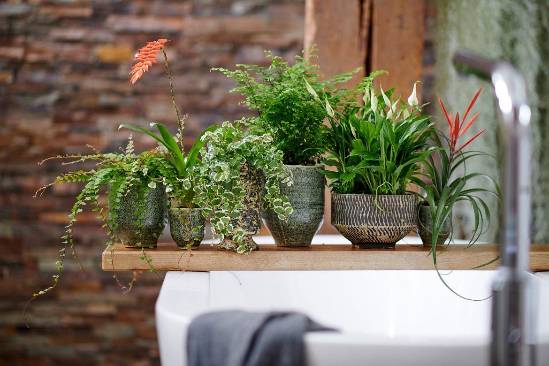 (M)ein Traum vom grünen Badezimmer