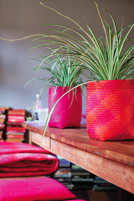 Grünlilien schaffen eine behagliche Atmosphäre