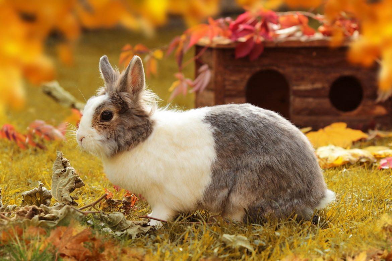 Kaninchen im Freigehege - Woran du im Herbst denken solltest