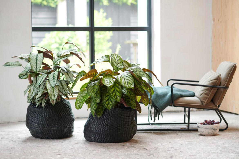 Mit Zimmerpflanzen entspannen
