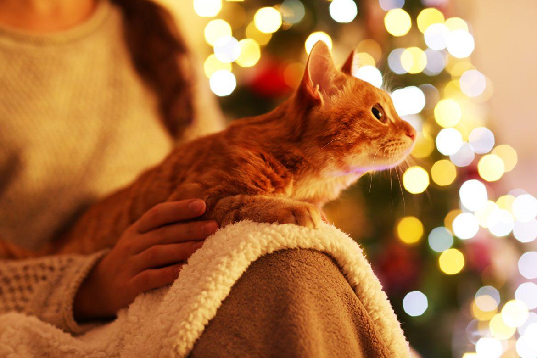 So wird die Weihnachtsdeko keine Gefahrenquelle für Haustiere