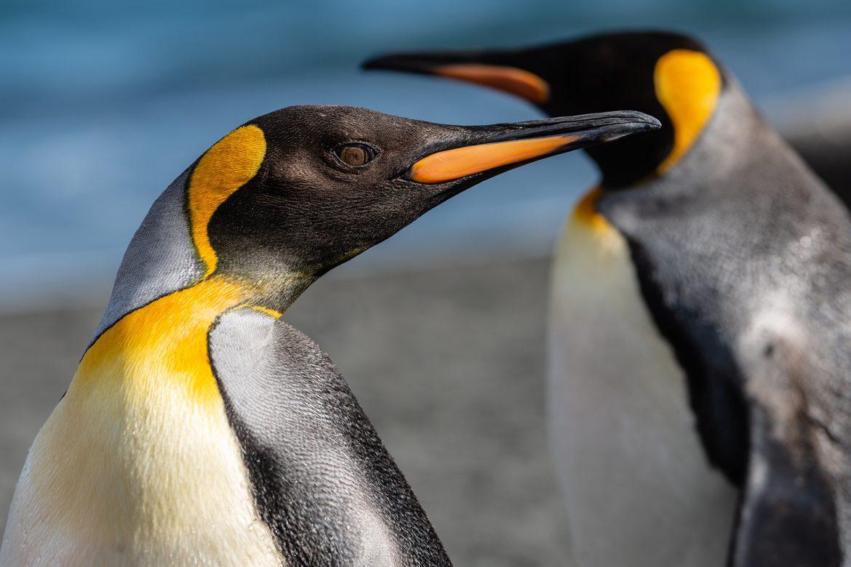 WWF: Gewinner und Verlierer 2019 - Wenig Licht und viel Schatten im Tierreich