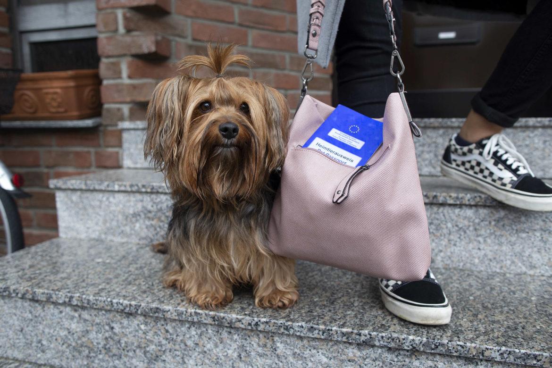 Sei kein tierischer Impfmuffel! Der Welttag der Tierimpfung am 20. April macht darauf aufmerksam, dass Impfungen unsere Hunde und Katzen und damit auch den Menschen vor schweren Erkrankungen schützen
