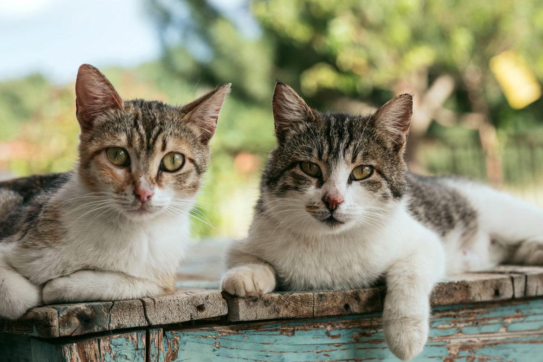 Achtung: Wurmgefahr! Darmparasiten wie Würmer sind keine Seltenheit. Sie gefährden die Gesundheit der Katze und des Katzenhalters.