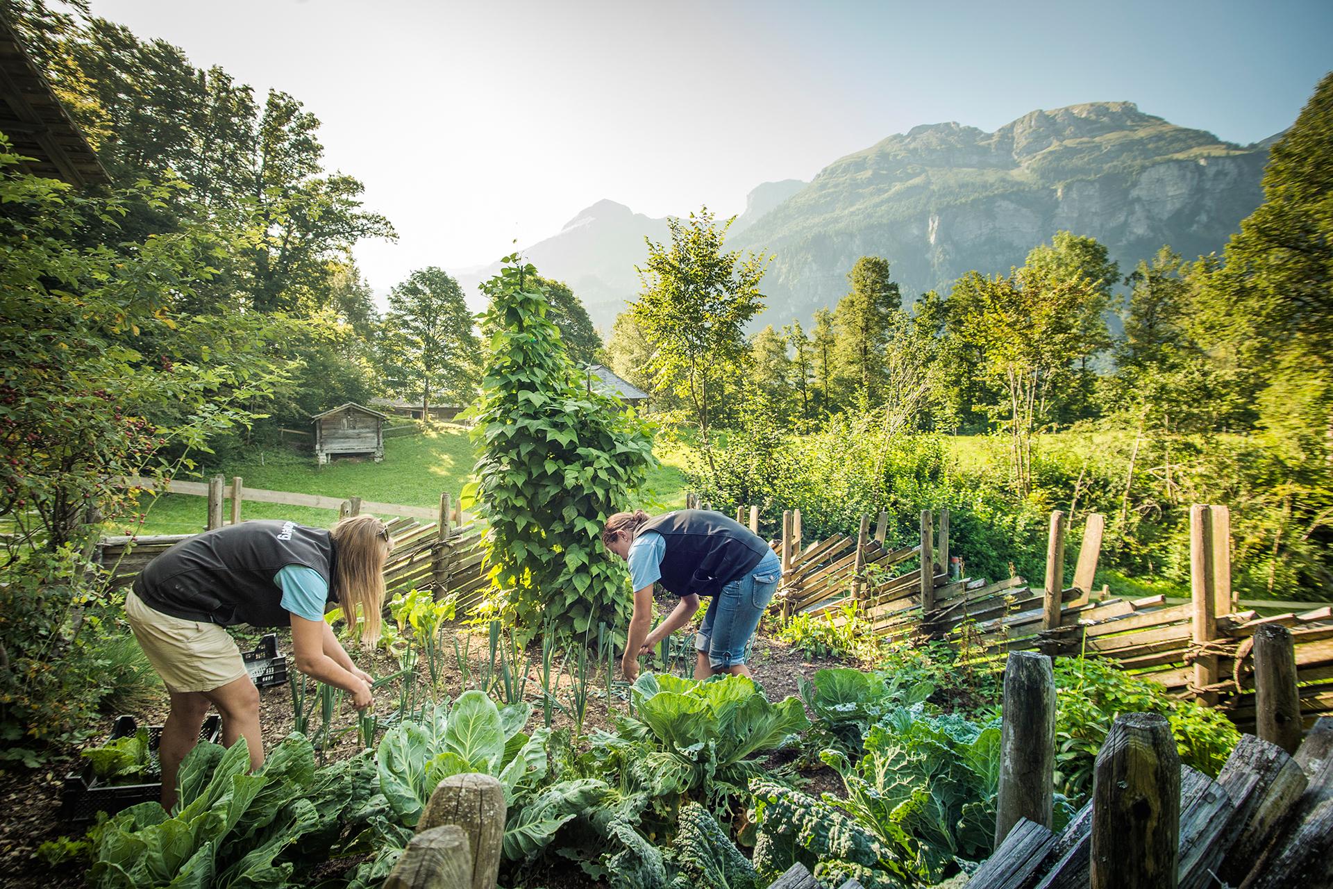 Die historischen Gemüsegärten der Schweiz 5