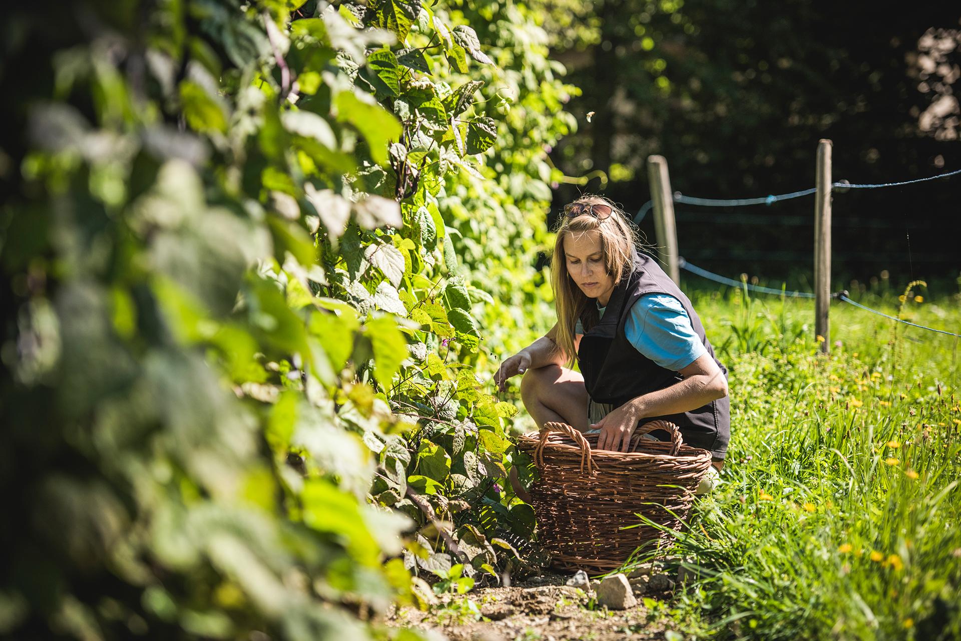 Die historischen Gemüsegärten der Schweiz 6