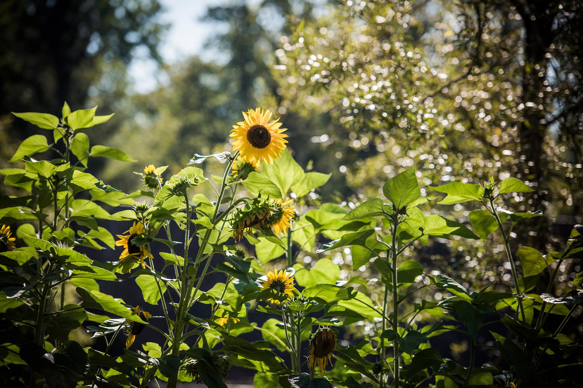 Die historischen Gemüsegärten der Schweiz 7