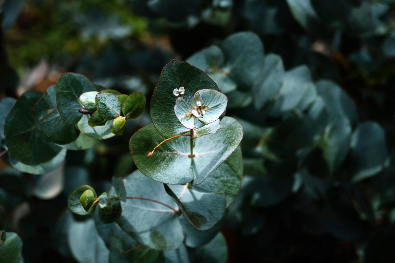 Dove »Powered by Plants« – die erste zertifizierte Naturkosmetik von Dove