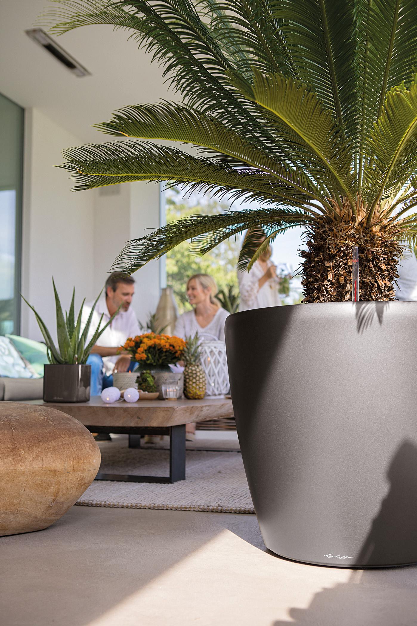 Eine Palme verströmt Südsee-Flair