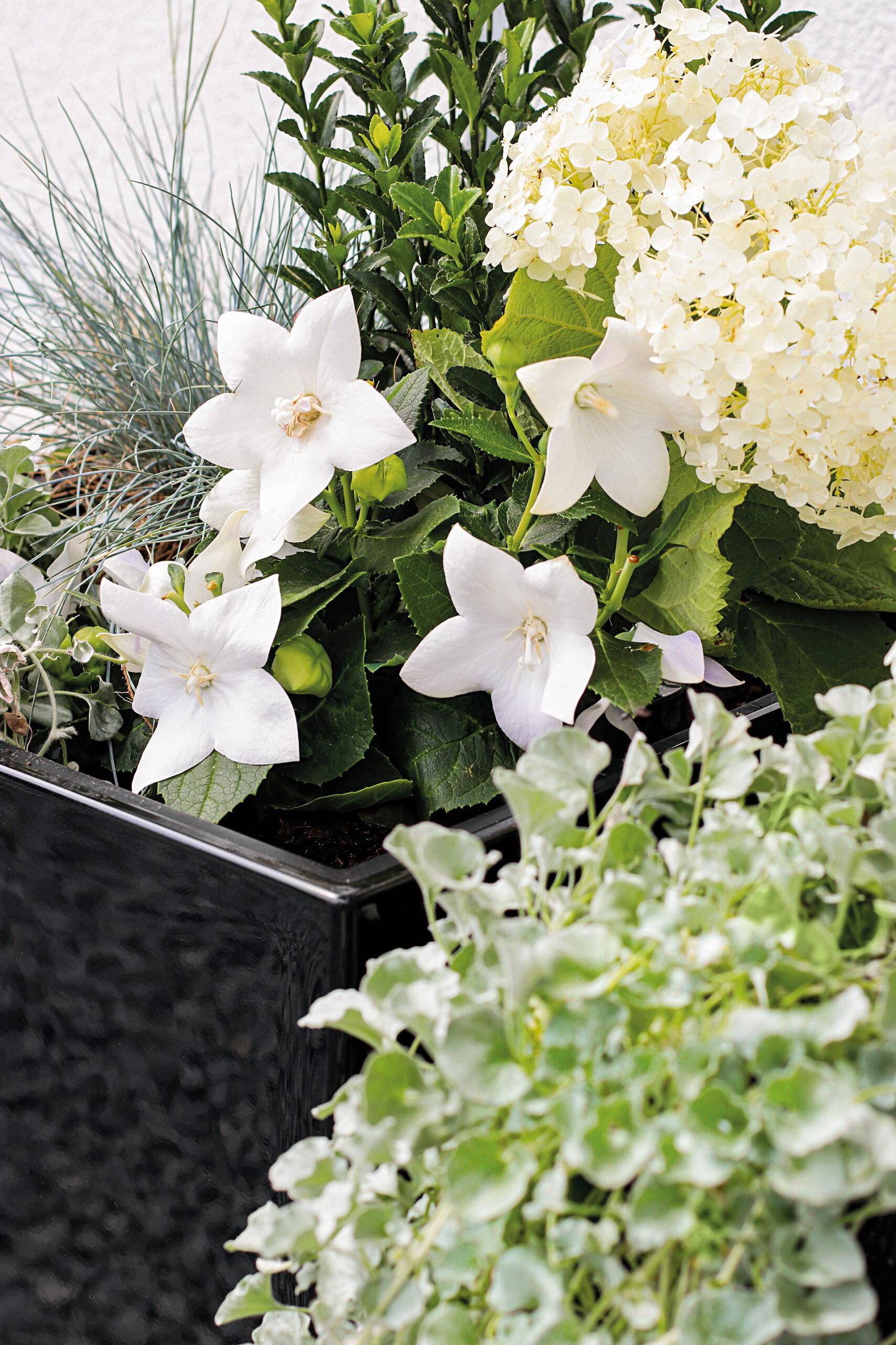 Frisches Grün mit üppigen weißen Blüten betont die geometrischen Formen