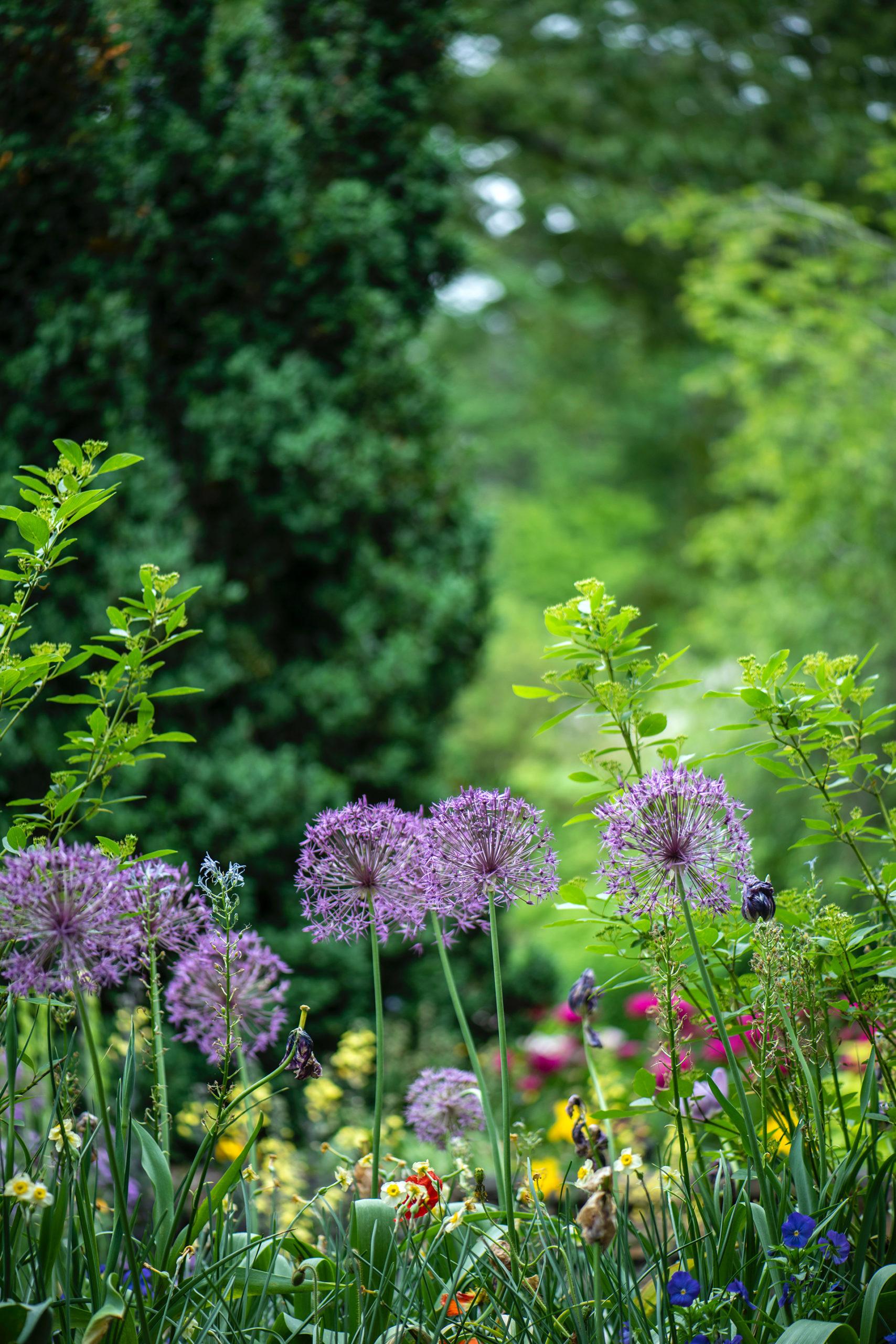 So sieht ein gesunder naturnaher Garten aus