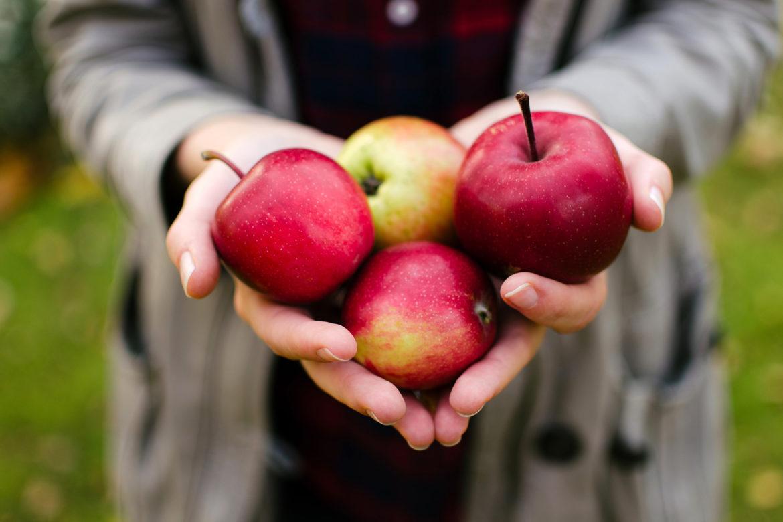 Apfelküche. Vom Baum auf den Tisch – über 70 herzhafte & süße Rezepte