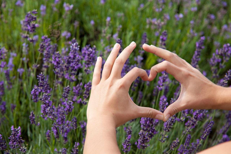 Lavendelzauber 2.0