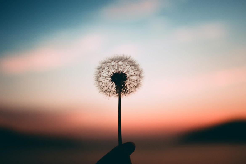 Mein Journal für ein achtsames Leben. Innere Ruhe – Zufriedenheit – Selbstliebe
