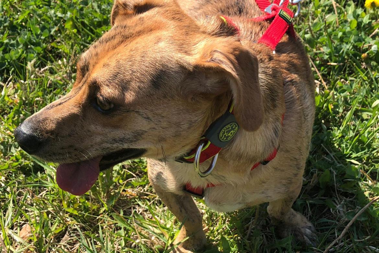 Terra Canis GETREIDEFREI – gesunde Ernährung, gesunder Hund