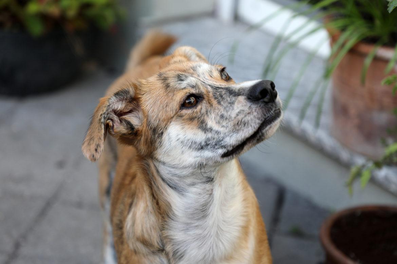 Terra Canis – Save the planet. Hundemenüs, die die Welt ein klein wenig besser machen.