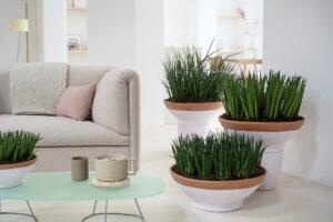 Zimmerpflanzen als grüne Superhelden