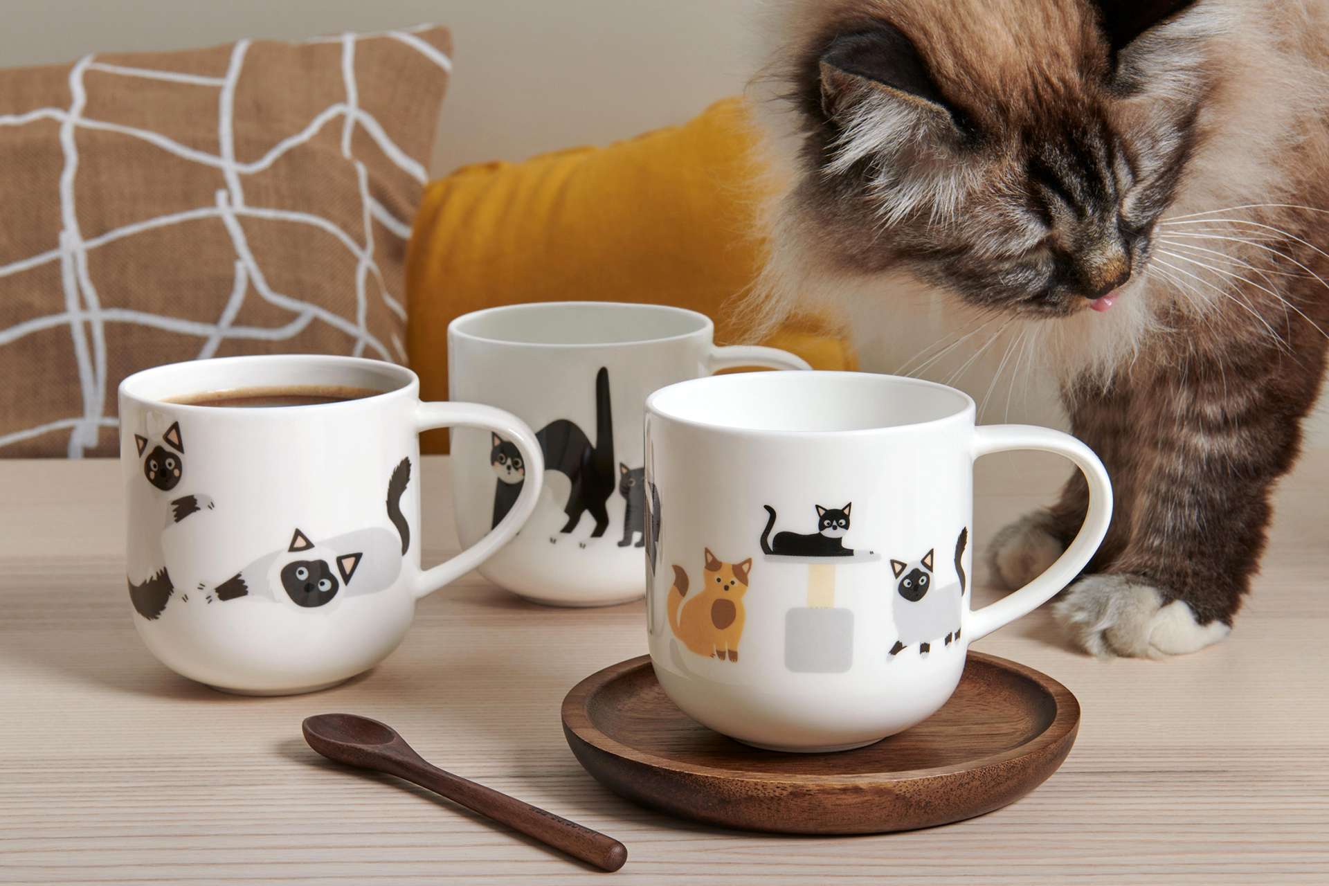 ASA SELECTION COPPA CATS & DOGS