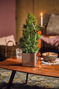 Mini-Bäumchen mit Sternengirlande und Kerzenhalter