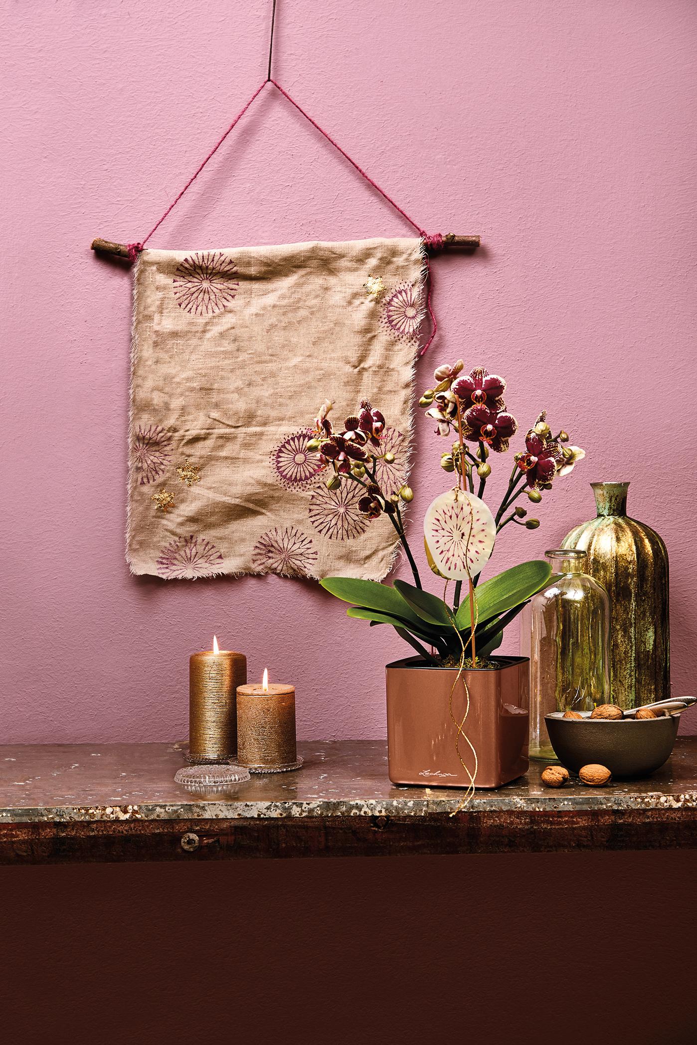 Glanzvoller Auftritt der Orchidee