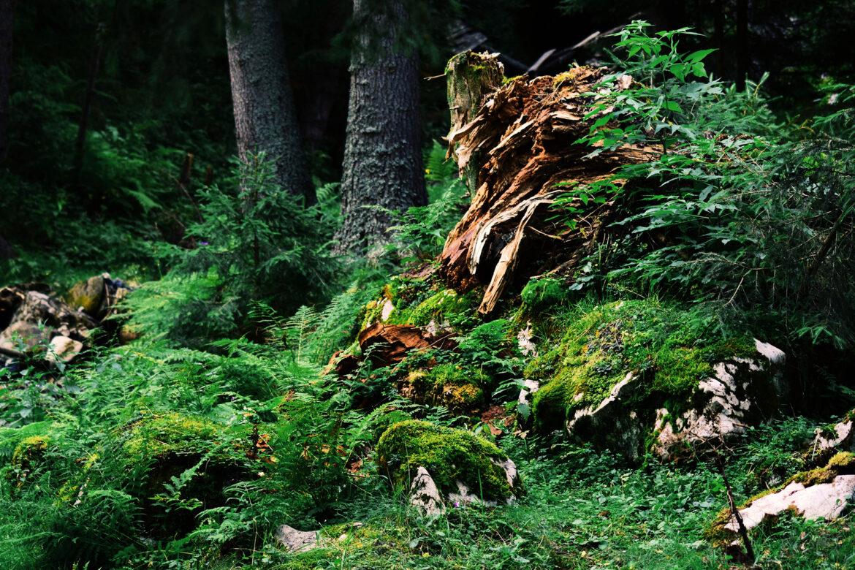 Unser Herz schlägt für den Wald – Buchtipps für Waldfreunde
