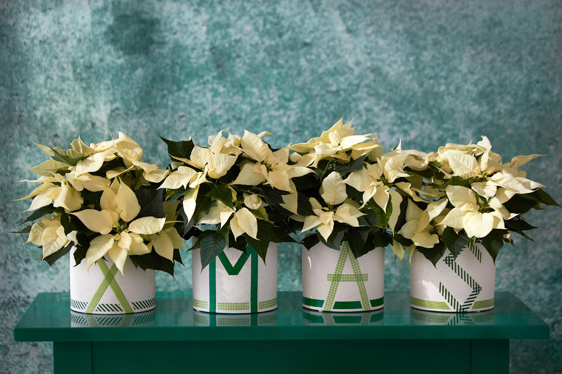 Ebenso einfach wie wirkungsvoll: Diese weihnachtliche DIY-Topfreihe lässt sich im Handumdrehen selbst gestalten