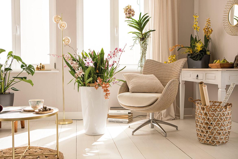 ORCHIDPON: Für lange Blütenfreude