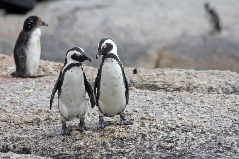 Pinguine kuscheln gern, Eichhörnchen haben Milchzähne und Kamelkinder keine Höcker
